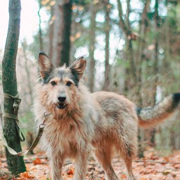 Амурка - Собаки в добрые руки