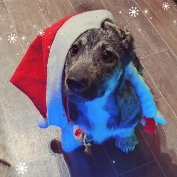 Монтана - Собаки в добрые руки