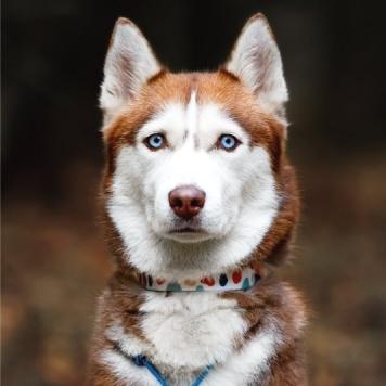 Айра - Собаки в добрые руки