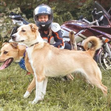 Кнопа - Собаки в добрые руки