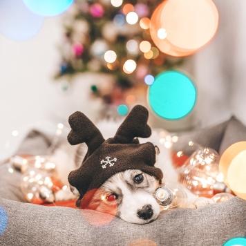 Зима - Собаки в добрые руки