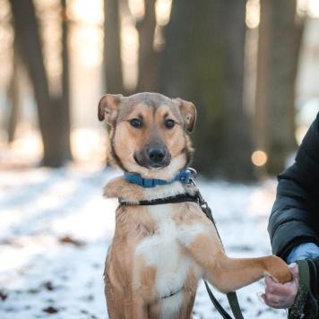 Мия - Собаки в добрые руки