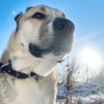 Бася - Собаки в добрые руки