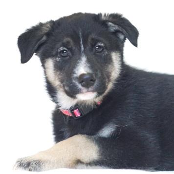 Хэрри - Собаки в добрые руки