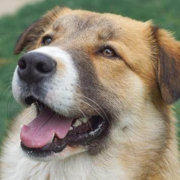 Топтыжка - Собаки в добрые руки