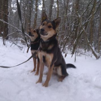Алиса+Сергунька - Собаки в добрые руки