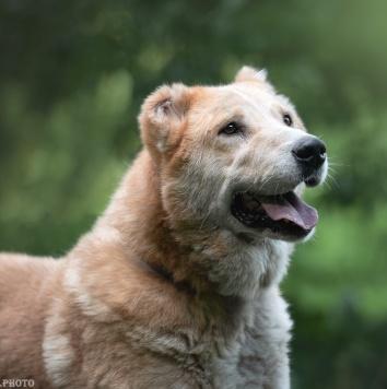 Кайсар - Собаки в добрые руки