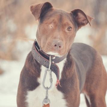 Вермонт - Собаки в добрые руки