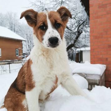 Яра - Собаки в добрые руки