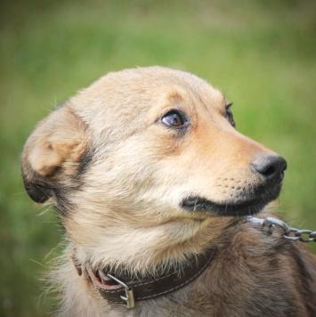 Луиса - Собаки в добрые руки