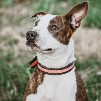 Салина - Собаки в добрые руки