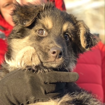 Маршал - Собаки в добрые руки