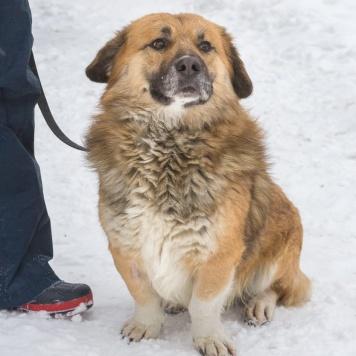 Лева - Собаки в добрые руки