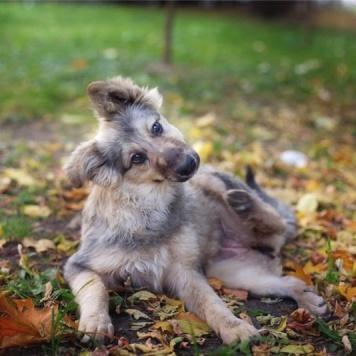 Анита и Мишель - Собаки в добрые руки
