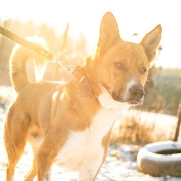 Золтан - Собаки в добрые руки