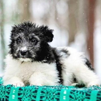 Мерлин - Собаки в добрые руки