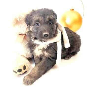 Сюзи - Собаки в добрые руки