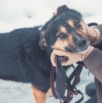 Весна - Собаки в добрые руки