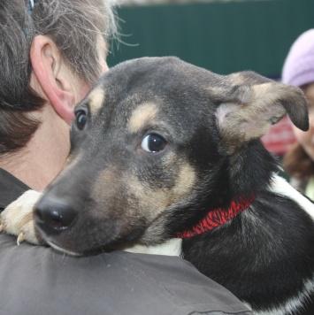 Мазайка - Собаки в добрые руки