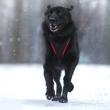 Рокки - Собаки в добрые руки