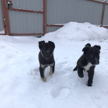 Яша и Стеша - Собаки в добрые руки