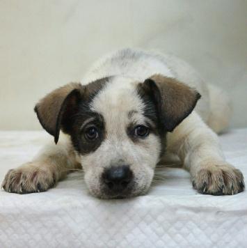 Шнапс - Собаки в добрые руки