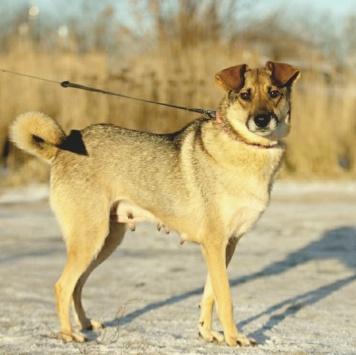 Буся - Собаки в добрые руки