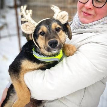 Бемби - Собаки в добрые руки