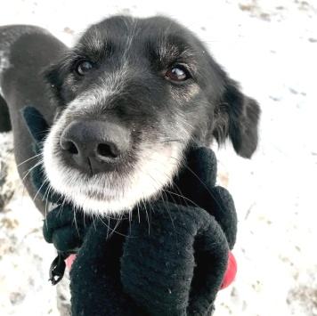 Даша - Собаки в добрые руки