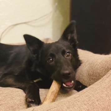 Ничка-Черничка - Собаки в добрые руки