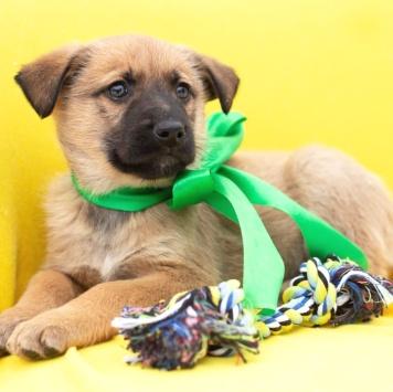 Масару - Собаки в добрые руки