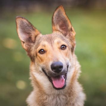 Игги - Собаки в добрые руки