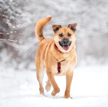 Фрея - Собаки в добрые руки