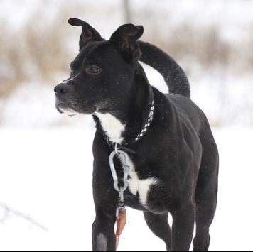Отарион - Собаки в добрые руки