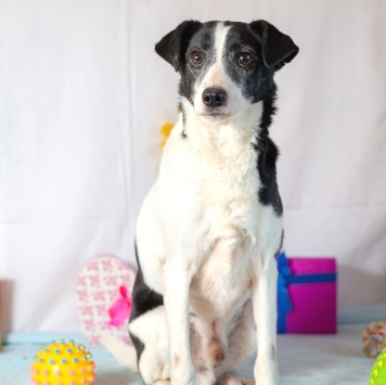 Гюнтер - Собаки в добрые руки