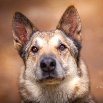 Гордый - Собаки в добрые руки
