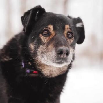 Джерси - Собаки в добрые руки