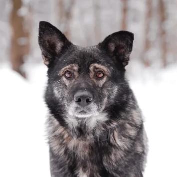 Териус - Собаки в добрые руки