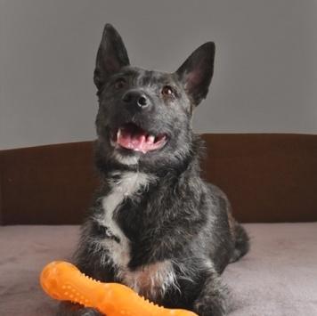 Тайра - Собаки в добрые руки