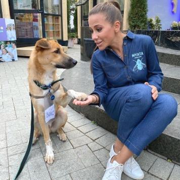 Викс - Собаки в добрые руки