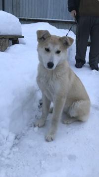 Медея - Найденные собаки