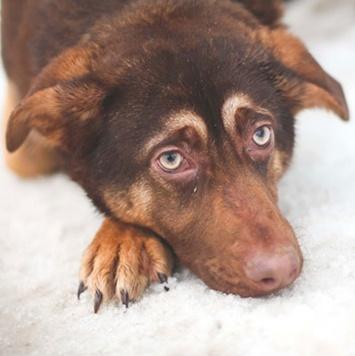 Эллада - Собаки в добрые руки