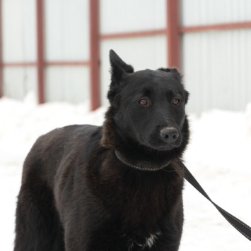 Тильда - Собаки в добрые руки