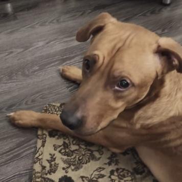 Рич - Найденные собаки
