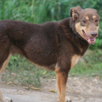 Карри Шоколадка - Собаки в добрые руки