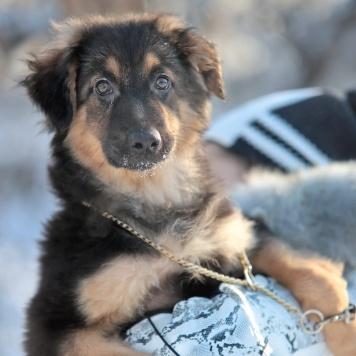 Адри - Собаки в добрые руки