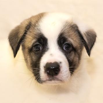 Жемчуг - Собаки в добрые руки