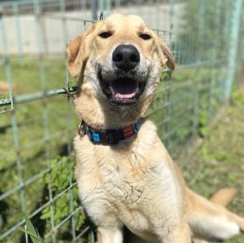 Прохор - Собаки в добрые руки