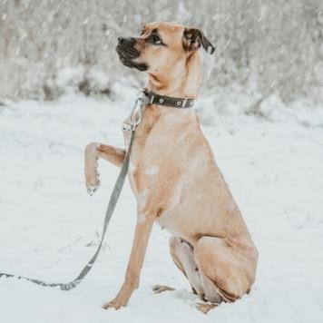 Ясандра - Собаки в добрые руки