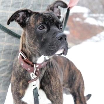 Нокер - Собаки в добрые руки